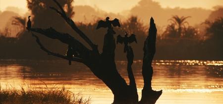 Kormorane sonnen sich in der Morgensonne
