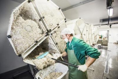 Sprossenproduktion auf den Biobauernhof
